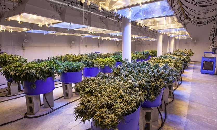 Employers face challenges on marijuana legalization
