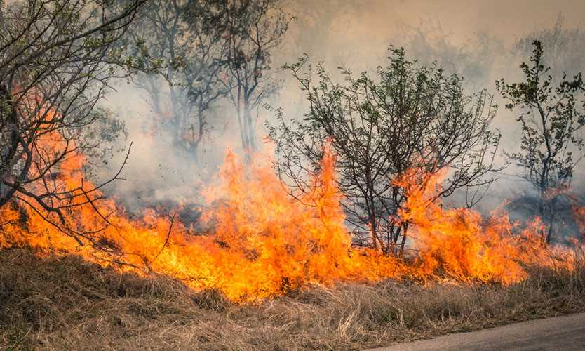 South Africa bush fire
