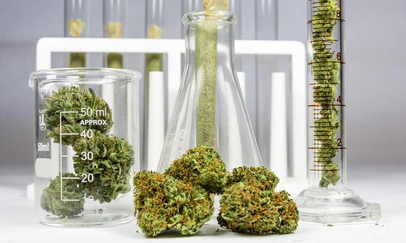 Regulator calls for more insurers to enter marijuana market
