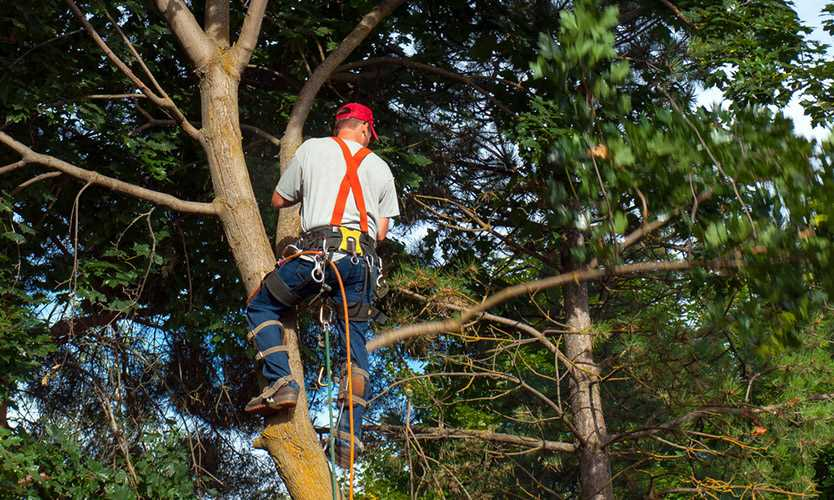 Cal/OSHA cites tree-trimmer after brush-chipper fatality