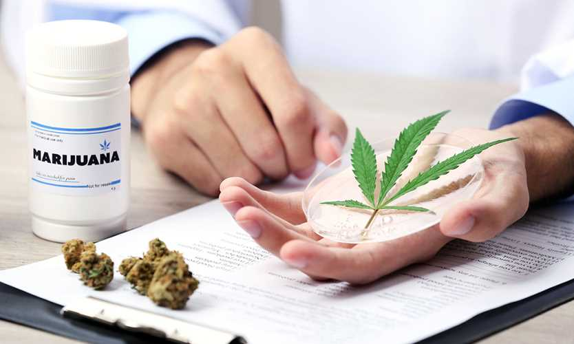 Marijuana initiative opens doors to opioid prescription alternatives
