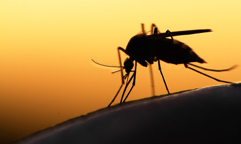 Miami Beach police seek workers comp for Zika infections