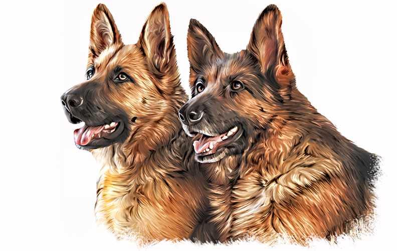 Missing shepherds win Nationwide pet insurance award