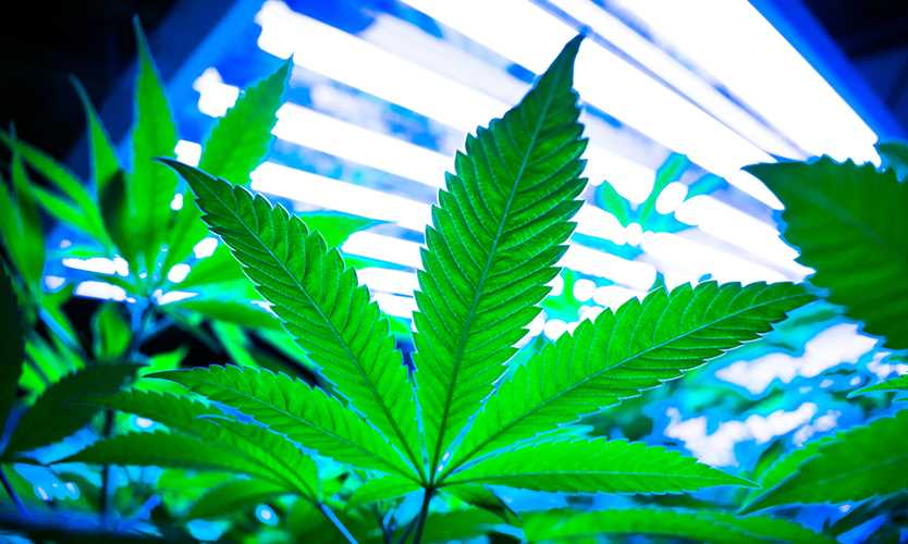 Insurance commissioners to form cannabis working group