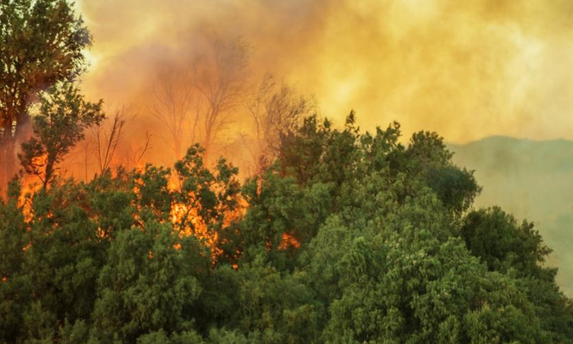 PG&E reaches $11 billion wildfire insurance settlement