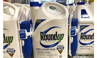Judge limits evidence in trial over Roundup cancer claims