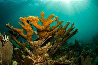 Parametric insurance policy launched for coral reefs Mesoamerican Reef Swiss Re
