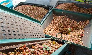 pistacio processing facility