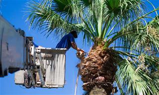 Tree trimming deaths under investigation in California CalOSHA