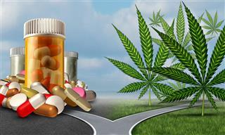 NFL seeks partnership players union marijuana pain management study
