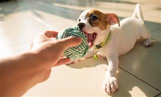 Insurance product to fetch toy replacement for your dog pets CHEWsurance pawlicies