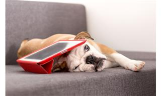 Pets technology insurance take priority over renters insurance Study