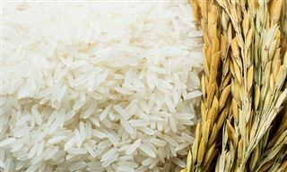 Chinese charged in conspiracy to steal US rice technology