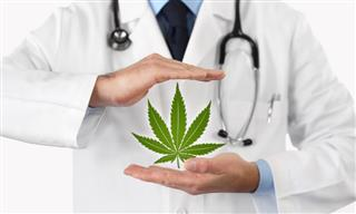 Massachusetts medical marijuana ruling Cristina Barbuto