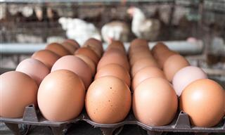 Wal-Mart sued over organic eggs from alleged homebody hens
