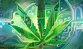 Cyber cannabis