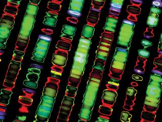 Genetic testing of workers brings benefits, but also poses legal exposures