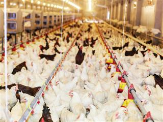Chicken processor Pilgrim's Pride cited for dangerous ammonia gas releases at Waco, Texas, processing plant