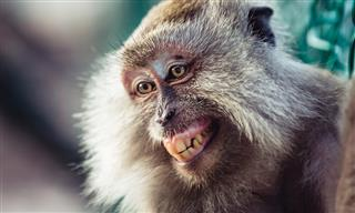 Monkey business in court Copyright dispute over macaque selfie