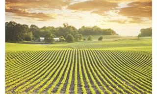 USI buys agribusiness broker CHS Insurance Services