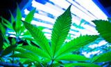 Captives an insurance option as marijuana sector seeks coverage