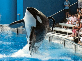 OSHA, others investigate fatal SeaWorld accident