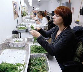 Professional services firms wary of liabilities for marijuana industry work
