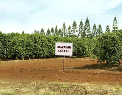 Judge approves $2.4M settlement for Thai farmworkers in Hawaii