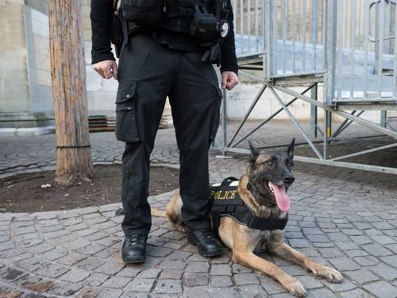 Workers comp only remedy for police officer bit by K-9 partner