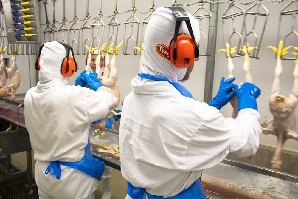Food processing worker safety improving, but injury rates still high