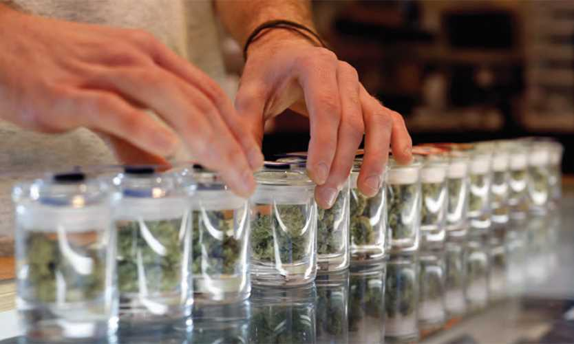 Medical marijuana may hold promise but federal law curtails research