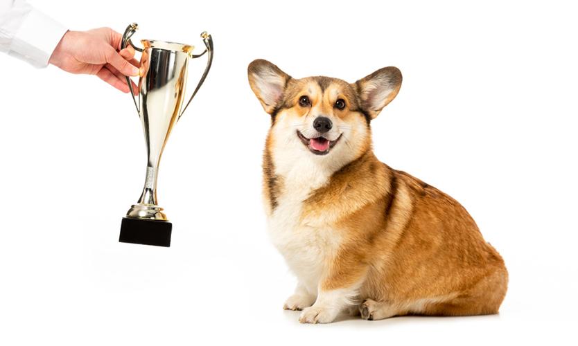 Trophy dog