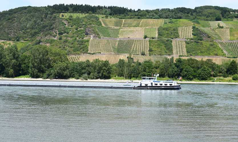 Rhine River drought