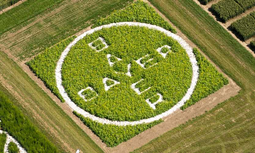 Bayer CEO would consider Monsanto glyphosate settlement depending on costs