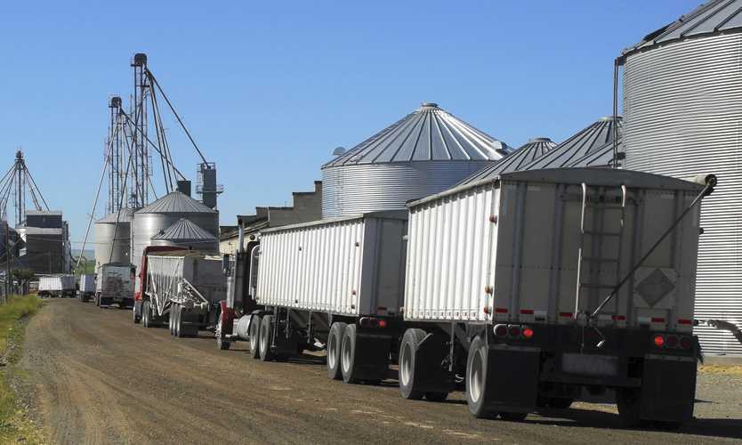 Insurer not liable for policyholder's defense in trucker's allergy death